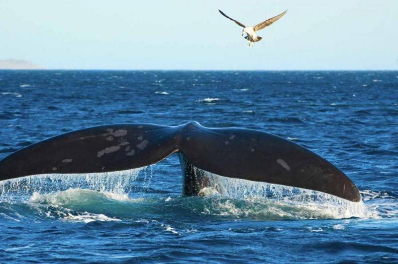 Full Day Hermanus & The Whale Route Package