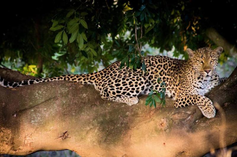 5 Day Kruger Park & Sabi Sands Safari Package