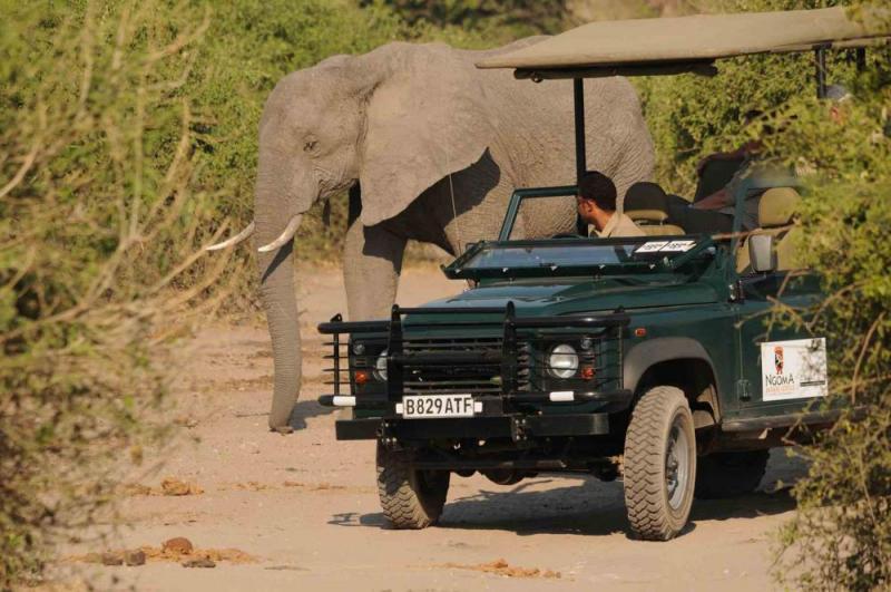 Best Of Singita Safari Package