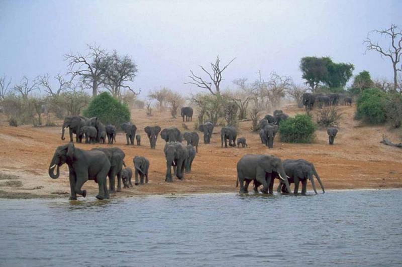 Madikwe Safari & Cape Town Package