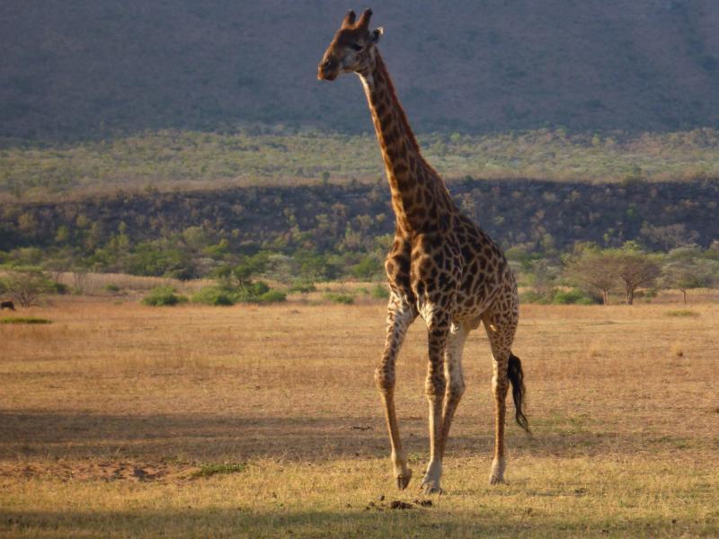 Sun City & Pilanesberg National Park Tour