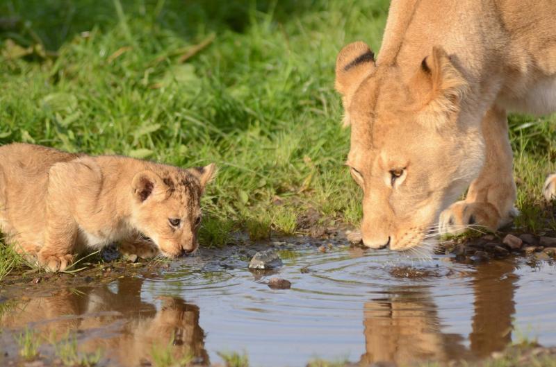 Lion And Rhino Safari Park Tour