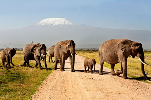 3 Days Amboseli Safari From Nairobi, Kenya Package