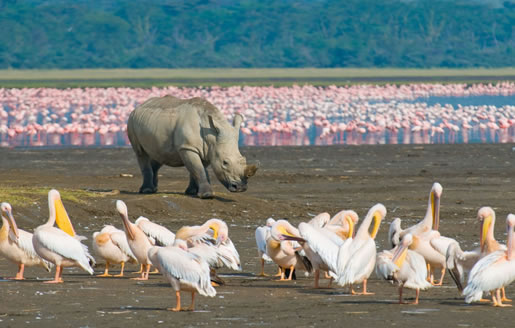 5 Days Amboseli, Lake Nakuru And Masai Mara Safari Package