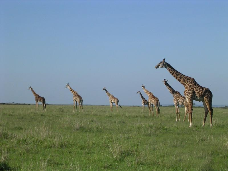Africasights Adventures Camping Safaris Package