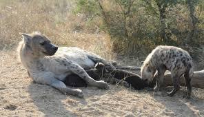 6 Day Kruger Park Safari Packages