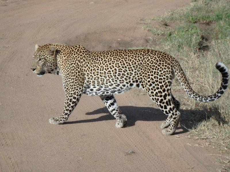 09 Days Tanzania Cheetah Safaris Package