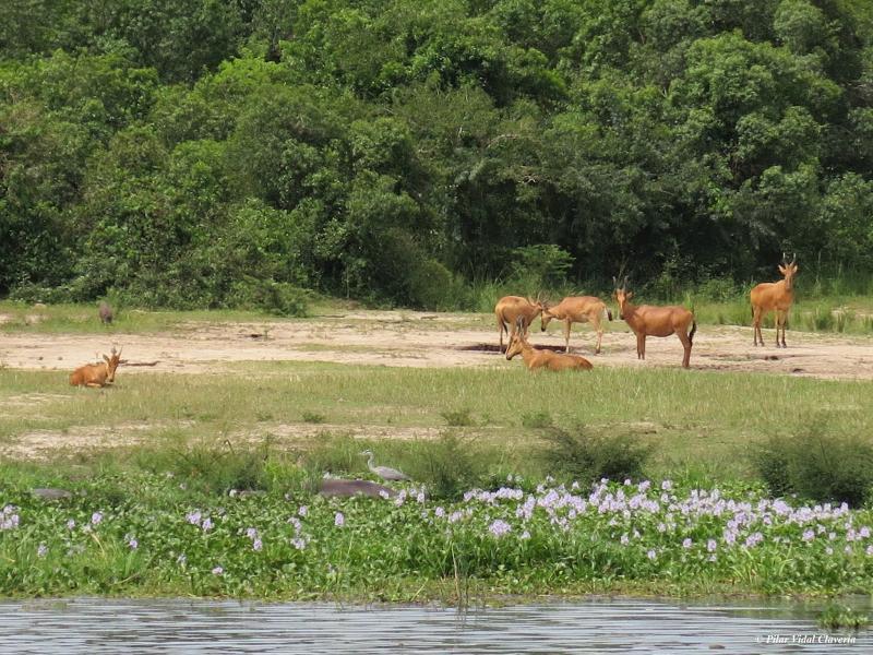 African Nile Safari Package