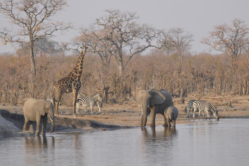 Victoria Falls To Hwange National Park Package