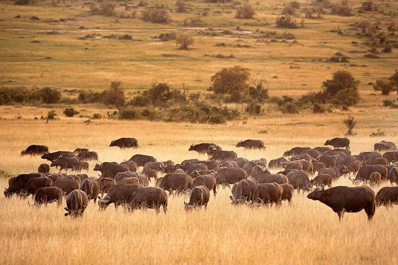 Two Days Two Nights Safari Package