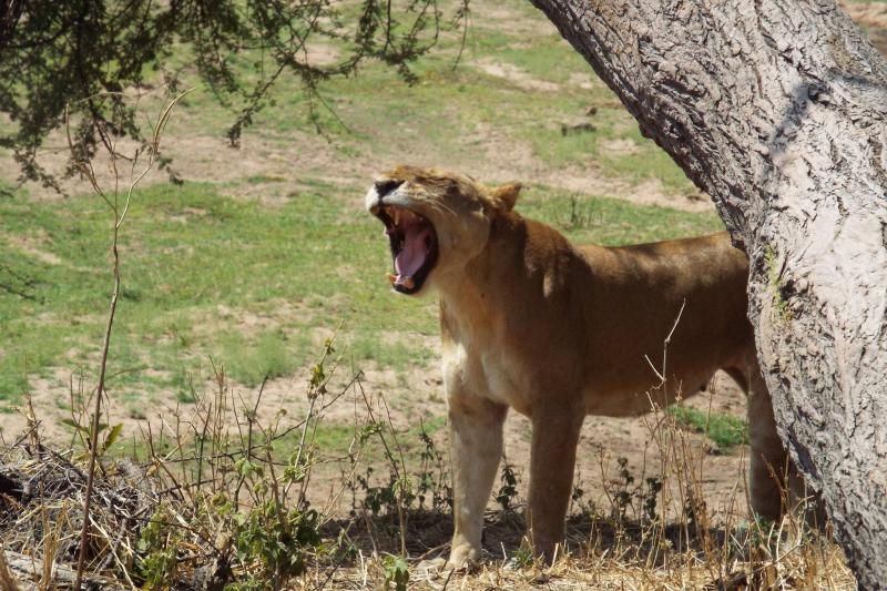 One Day One Night Safari Package