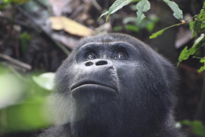 7 Days Rwanda Beyond The Gorillas Odyssey Package