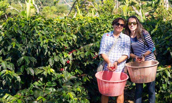 Coffee Tour Package