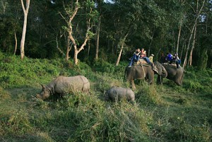 Parsa Wildlife Reserve Package