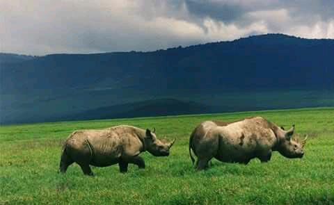 7 Days Kenya Budget Camping Tour In Masai Mara, Amboseli And Lake Nakuru , Lake Naivasha National Pa