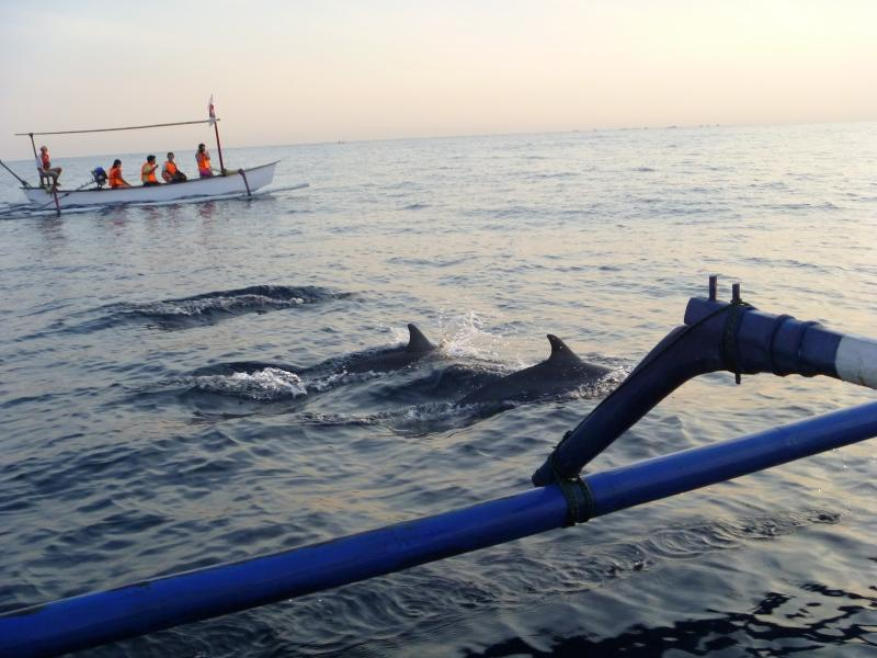 Bali Dolphin Watching Tour - Bali Dolphin Tour Lovina Package