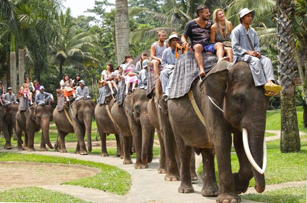 Bali Elephant Ride Adventure - Elephant Park Bali Package