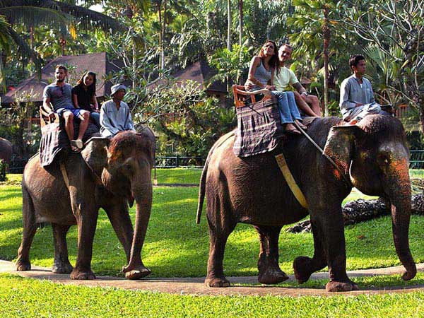 Bali Elephant Safari Ride And Bali Rafting