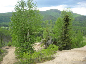 Guided Hiking Tour – Wickersham Dome Trail Tour