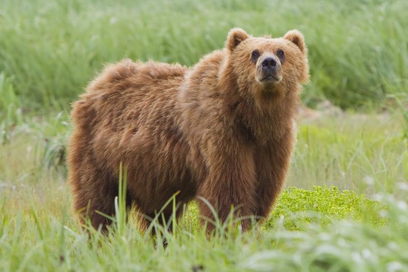 Ursus Bear Habitat Encounter Tour