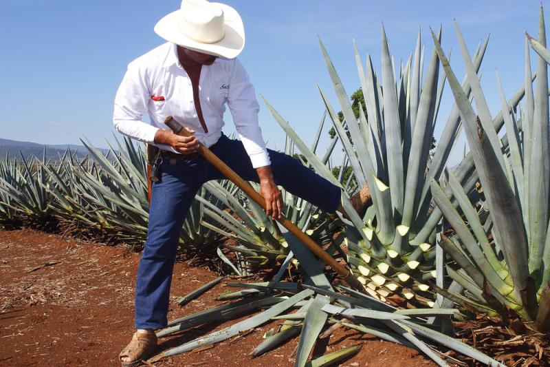 Private And Personal Tequila Tour In Mazatlan Tour