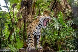 Private Belize Zoo Wildlife And City Tour