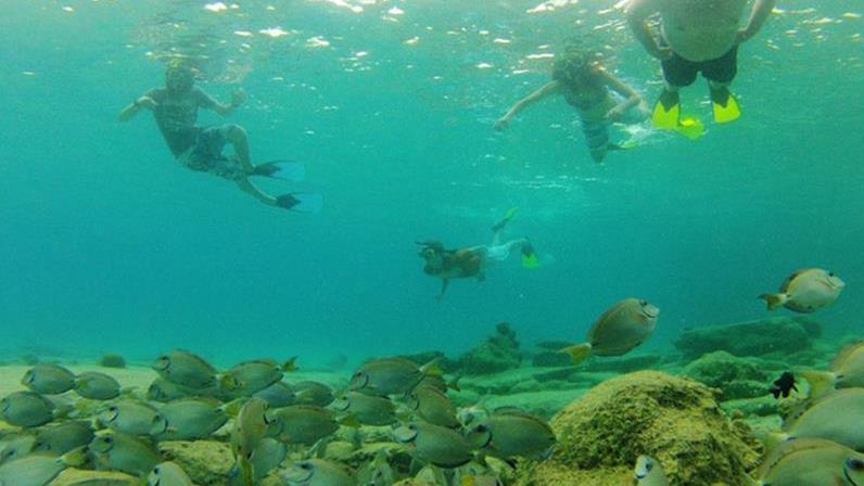 Bonaire Glass Bottom Kayak Through The Mangroves Tour