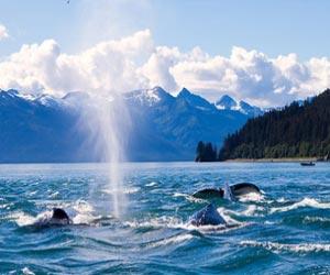Denali - Valdez Explorer Nb Package