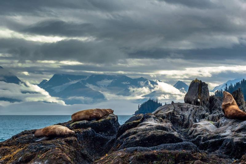 6 Day Shoup Glacier To Columbia Glacier And Glacier Island Package