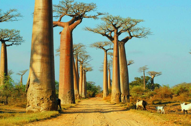 Baobabs & Kirindy Forest Package