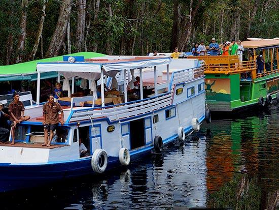 Wild Orang Utan Houseboat Trip Package