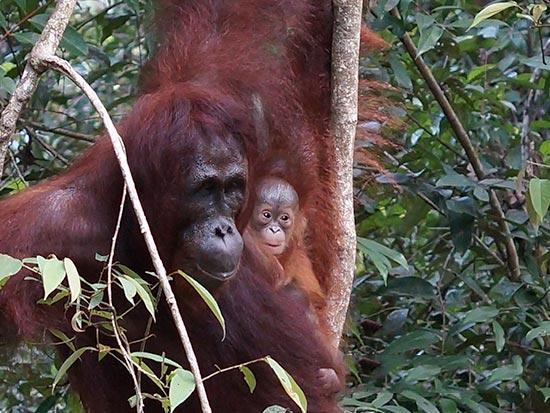 Borneo – Java – Bali – Komodo Package