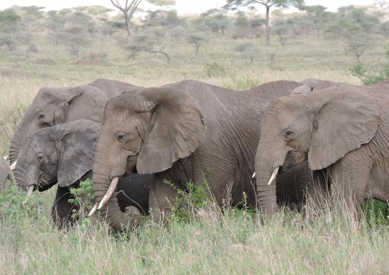 3 Days Tanzania Safari To Lake Manyara - Ngorongoro Crater From Either Nairobi, Mombasa Or Arusha Pa