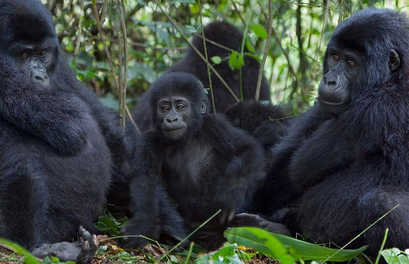 3 Days Fly In Gorilla Trekking Bwindi National Park Package