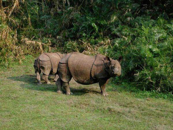 Bardia Jungle Safari Package