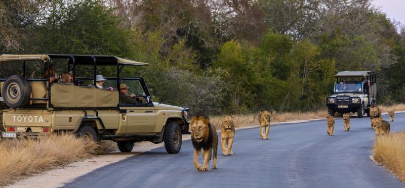 Kruger Day Safaris Tour