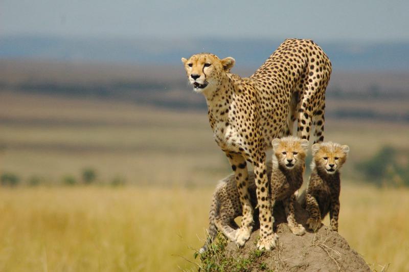 Murchison Falls National Park Safari Tour