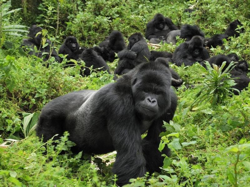 Gorillas & Water Rafting Safari In Uganda Tour