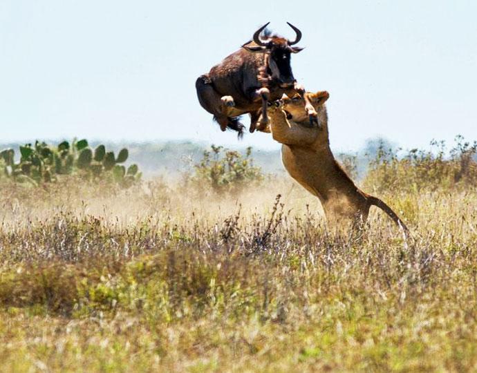 5 Days Tailor-made Safari In Uganda Tour