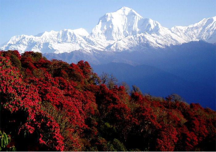 Annapurna Base Camp Trek Via Ghorepani Poonhill Package