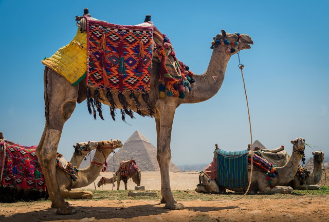 Overnight Cairo Tours From Port Said