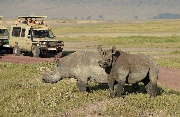 Kenya Safari Holidays To Samburu And Masai Mara Tour