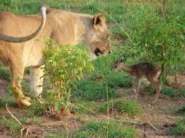 7 Days Cultural And Safari Camping Tour