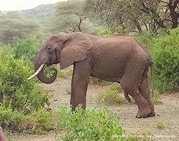 7 Days Wildlife Safari Tour