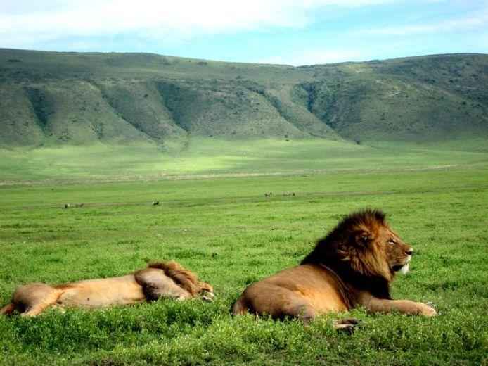 9 Days Wildlife Safari Tour