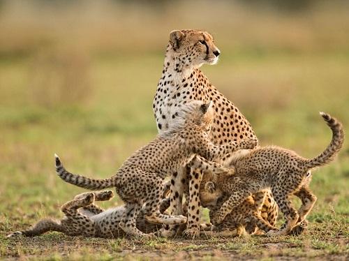 11 Days Cultural And Safari Tour