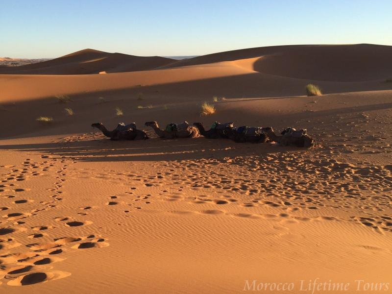5 Days Marrakech / Fes Desert Tour Package
