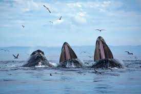 Valley Of The Whales Tour Package