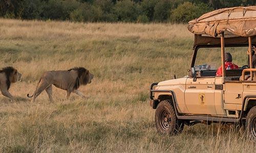 Tented Camps Safari Tour