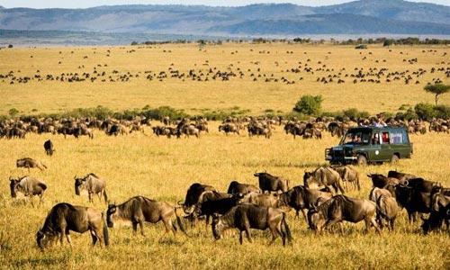 Kenya Lodge Safari Tour